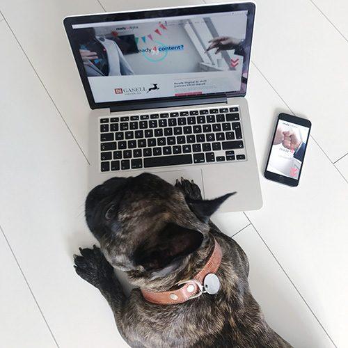 Att marknadsföra webshop med en djurbild