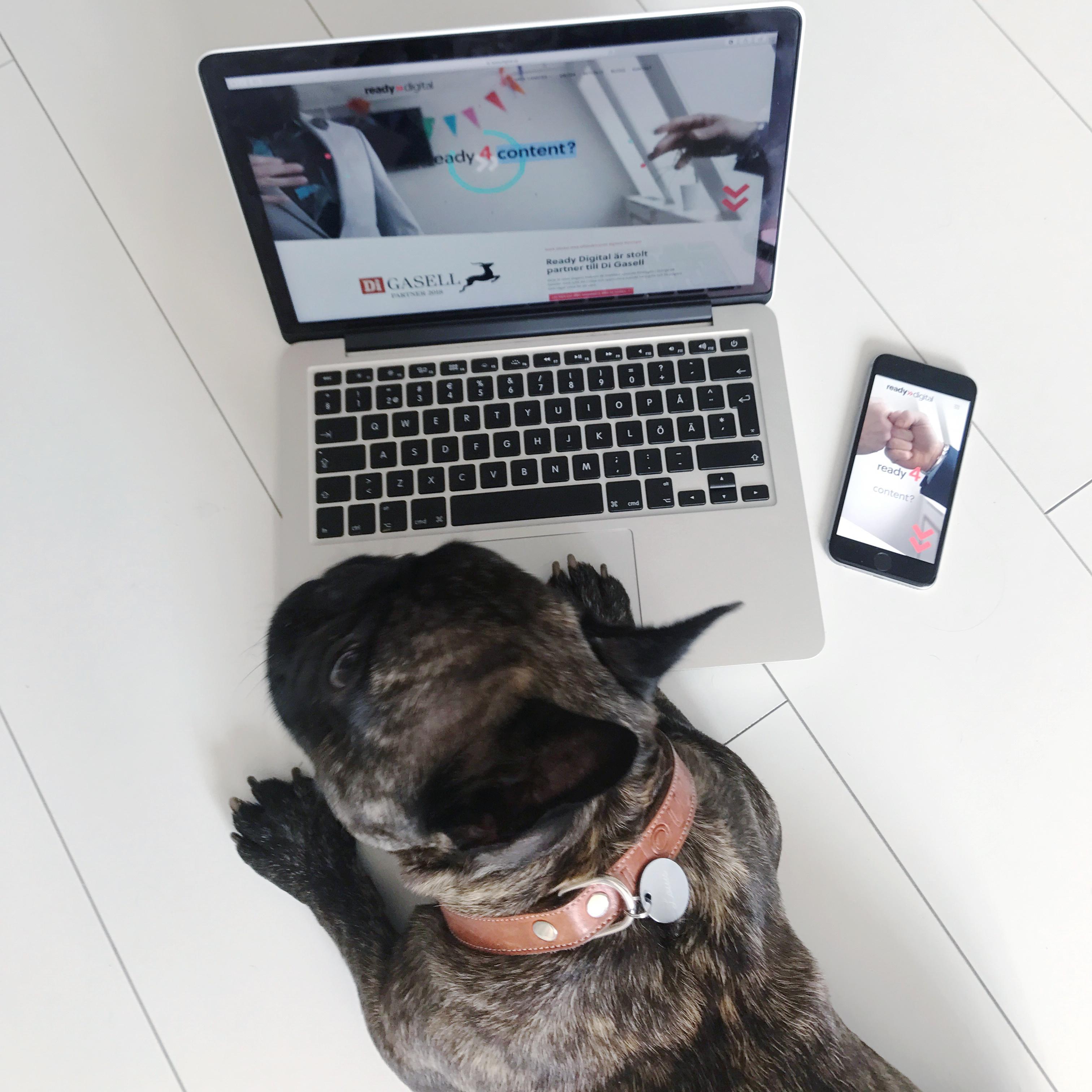 Instagram för företag: Louis kollar på vår hemsida