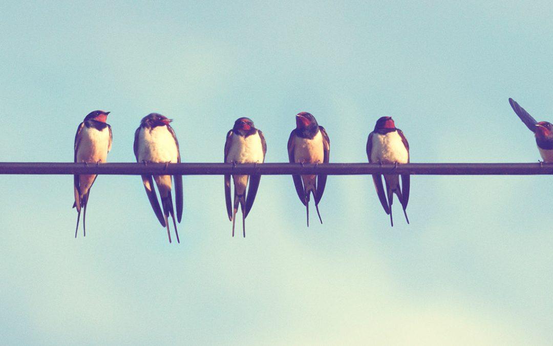 Twitter för företag: Guide för att lyckas
